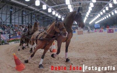 Madrid Horse Week, fotografía de caballos